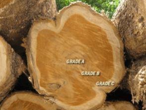perbedaan kualitas kayu jati